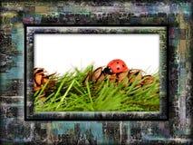 Frame onzelieveheersbeestje Royalty-vrije Stock Afbeelding