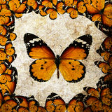 Frame with orange butterflies Royalty Free Stock Image