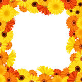 Frame with orange and yellow gerbera flowers. Vector illustration. Stock Photos