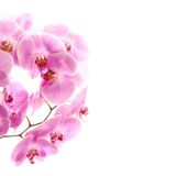 Frame orchid isolated white Stock Images