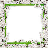 Frame overgrown blossom tree branches Stock Photography