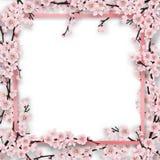 Frame overgrown sakura tree branches Royalty Free Stock Photo