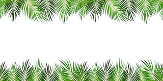 Frame from Palm Leaf with White Background. Vector Illustration. Stock Image