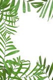Frame from palm leaves Royalty Free Stock Photography