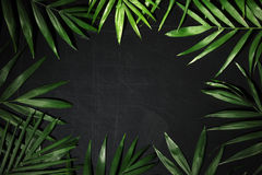 Frame of palm leaves Stock Photos