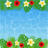 Frame of palm leaves and flowers on water background Stock Image