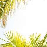 Frame with palm leaves Royalty Free Stock Images