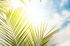 Frame with palm leaves Royalty Free Stock Photo