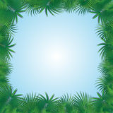 Frame from palm trees Royalty Free Stock Photography