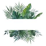 Frame with palms leaves for greeting card,wedding invitation. Watercolor illustration. Frame with palms leaves for greeting card,wedding invitation. Watercolor royalty free stock photography