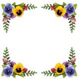 Frame, Pansies e rosas da flor Fotos de Stock