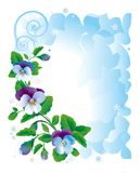 Frame pansy flowers Stock Images