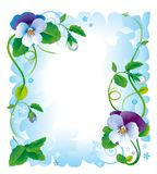 Frame pansy flowers Royalty Free Stock Photos