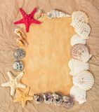 Frame from paper, starfishes and cockleshells Stock Image