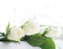 Frame part with white roses Stock Photos