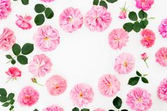 Frame of pastel pink roses and petals on white background. Flat lay, top view. Flower pattern with pink flowers. Frame of pastel pink roses and petals on white royalty free stock image