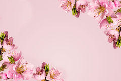 Frame with peach flowers Stock Image