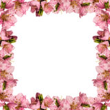 Frame with peach flowers Stock Photography