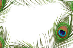 Frame of peacock feather eye Royalty Free Stock Photography