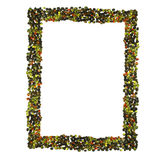 Frame of pepper Royalty Free Stock Photos