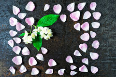 Frame with petals of pink tea rose and jasmine flowers Stock Photo