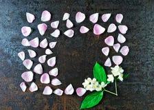 Frame of petals of pink tea rose and jasmine flowers Stock Photos