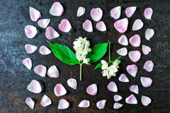 Frame of petals of pink tea roses and jasmine flowers Stock Image