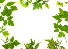 Frame photo of  leaves Stock Images