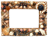 Frame for photo from marine cockleshells Stock Images