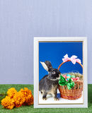Frame with photo rabbit photography and basket with easter eggs decorated with bows Royalty Free Stock Photography