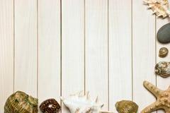 Frame photos of seashells Stock Images