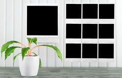 Frame photos Royalty Free Stock Images