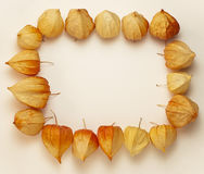 Frame of Physalis Royalty Free Stock Photos
