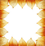 Frame of Physalis Royalty Free Stock Images