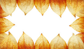 Frame of Physalis Stock Photography