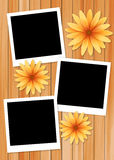 Frame picture with sun flower on wood background Royalty Free Stock Images