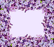 Frame for pictures with lilac flowers Stock Photos