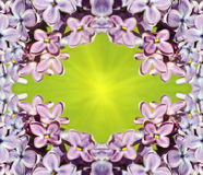 Frame for pictures with lilac flowers. Natural pattern. Stock Photography