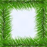 Frame from pine. Frame from green pine (vector vector illustration