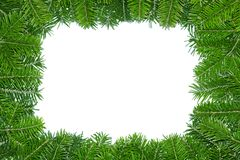 Frame of pine boughs. Royalty Free Stock Photography