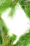 Frame from the pine branches Stock Photography