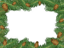 Frame of pine Stock Photography