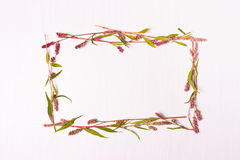 Frame of pink color for inscriptions Royalty Free Stock Images
