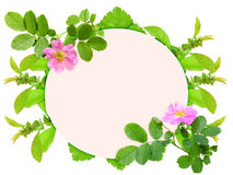Frame with pink dog-rose flowers Royalty Free Stock Images