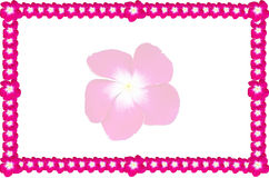 Frame and pink flower Royalty Free Stock Images