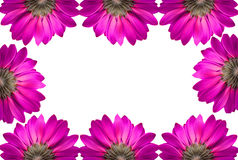 Frame of pink flowers Royalty Free Stock Photos