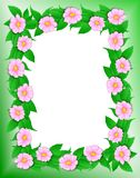 Frame - Pink Flowers Royalty Free Stock Photography