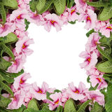 Frame of pink flowers isolated Stock Photo
