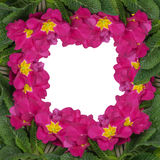 Frame of pink flowers isolated Royalty Free Stock Image