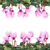 Frame of pink flowers Stock Photography